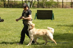 Einzeltraining @ 4 dog and you